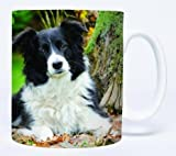 Autumn Leaves Border Collie Mug