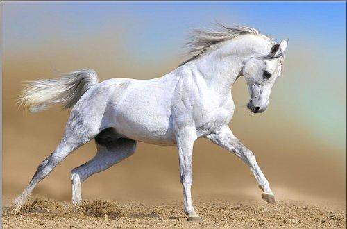 image-sur-toile-motif-cheval-blanc-startonight-animal-80-cm-x-120-cm-tableaux-pour-la-mur-encadres-p