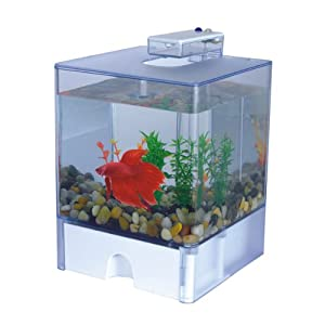 Aqua cube betta aquarium 0 8 gallon pet supplies for Betta fish tanks amazon