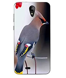 Case Cover Bird Printed Colorful Hard Back Cover For Sony Xperia XA Ultra Dual