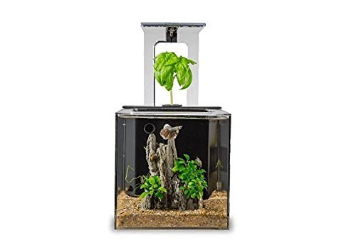ecoqubec-aquarium-desktop-betta-fish-tank-for-living-office-and-home-decor