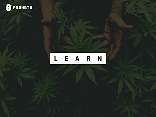 Is Cannabis a Gateway Drug?