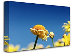 """Open Yellow Flower, Size: 24"""" x 16"""" (60cm x 40 cm Approx), Floral Flower Nature Canvas Art Picture Print, (FRAMED CANVAS)"""