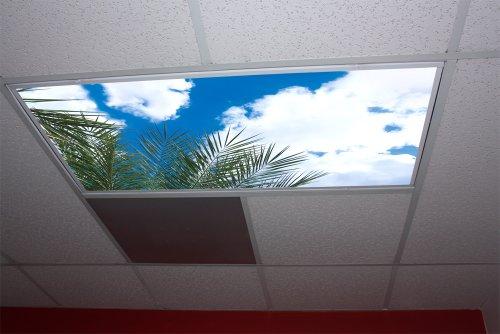 Palm Tree Lighting front-421021