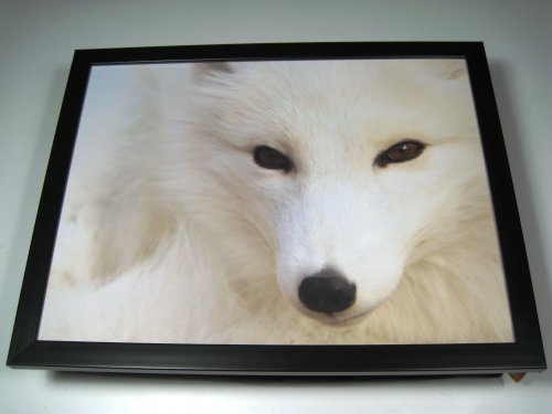 White Arctic Fox Snow Cushion
