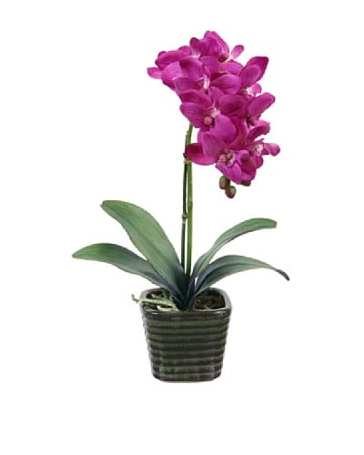 Winward Potted Orchid, Purple