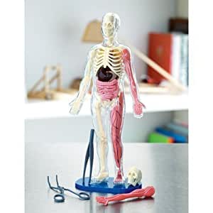 Human Body Model with Quiz Cards
