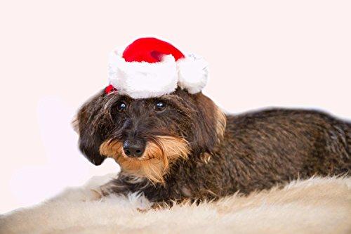 mini-nikolausmutze-fur-tiere-hunde-katzen-weihnachtsmutze-dekorationsmutze-vielseitig-rot-weiss