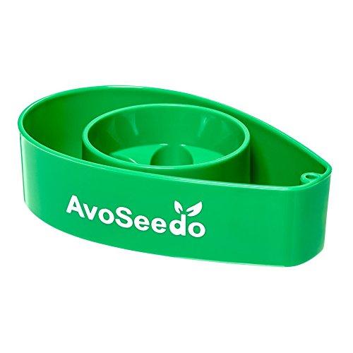 avoseedo-grow-your-own-avocado-tree