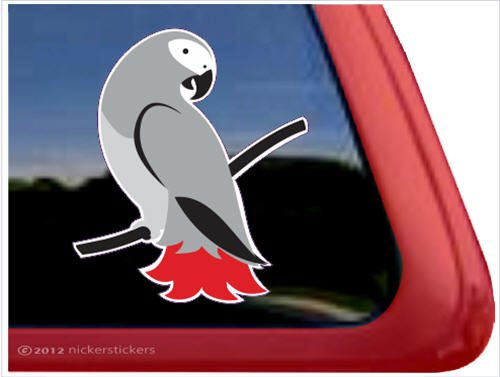 African Grey ~ Parrot Bird Vinyl Window Decal front-381596