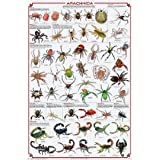 (24x36) Laminated Arachnida Spiders Educational Science Chart Poster