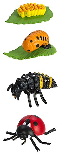 Safari Ltd Safariology Collection - Life Cycle of a Ladybug - Includes Egg, Larva, Pupa, and Ladybug Replicas - Educational Hand Painted Figurines - Quality Construction from Safe and BPA Free Materials - For Ages 4 and Up