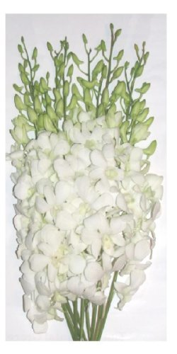 Fresh Flowers White Dendrobium Orchids