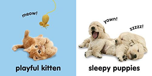 Baby-Touch-and-Feel-Puppies-and-Kittens-Baby-Touch-Feel