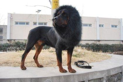 black large pet dog cat lion wigs mane hair festival party