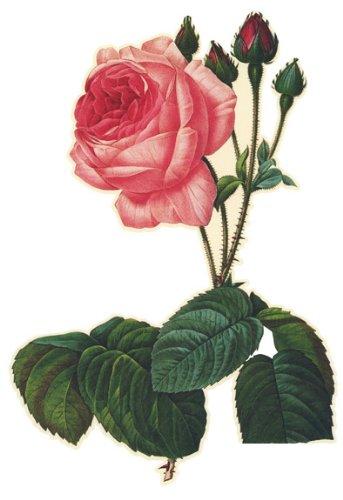 Wall Hugs Vintage Rose Flower Wall Decal