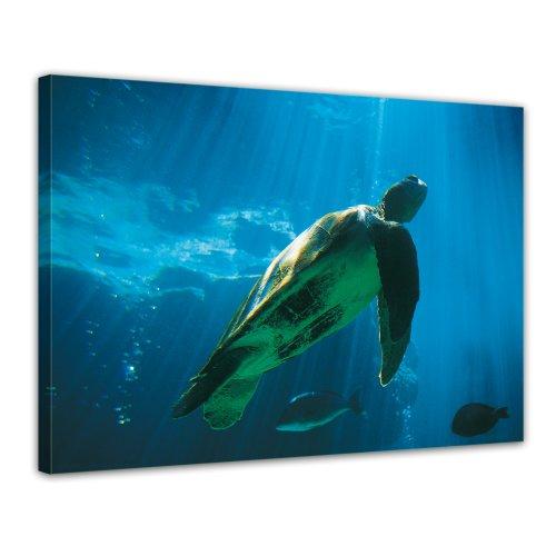 Bilderdepot24 Leinwandbild Schildkroete - 70x50 cm 1 teilig - fertig gerahmt, direkt vom Hersteller
