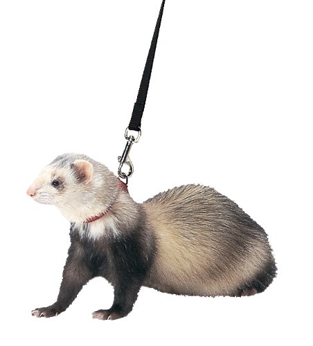 Ferret Harness and Leash Set