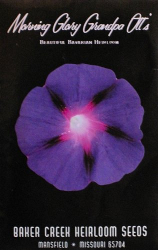 Morning Glory Grandpa Ott's Heirloom Seeds 35 Seeds