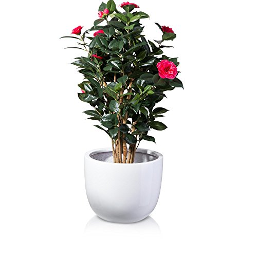 plant-pot-bottas-fibreglass-planter-flower-pot-colour-white-glossy-finish-weather-and-frost-proof-in