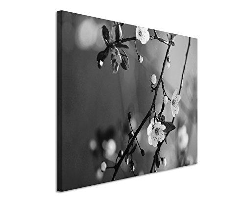 50x70cm Leinwandbild schwarz weiß in Topqualität Blühender Kirschbaum Japan