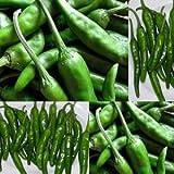 韓国食材*韓国産野菜★韓国産 青唐辛子(辛口) 500g