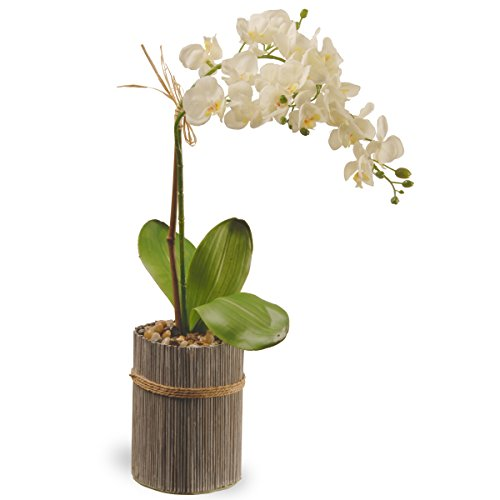 national-tree-garden-accents-potted-orchid-20-white