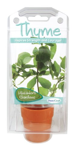 Dunecraft Thyme Capsule Terrarium Science Kit