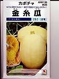 金糸瓜  タキイのそうめんカボチャ種です