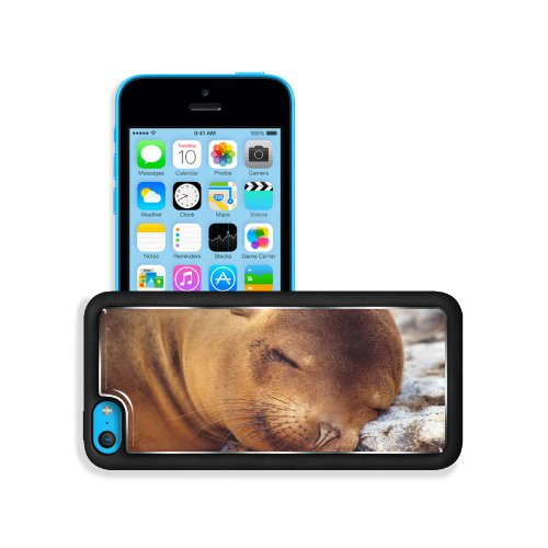 Seal Fur Seal Dream Baby Apple Iphone 5C Snap Cover Premium Aluminium Design Back Plate Case Customized Made To Order Support Ready 5 Inch (126Mm) X 2 3/8 Inch (61Mm) X 3/8 Inch (10Mm) Liil Iphone_5C Professional Metal Case Touch Accessories Graphic Cover front-739029