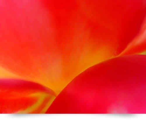 Tea Rose Bush
