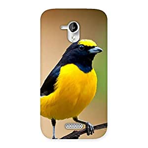 Delighted Sweet Bird Back Case Cover for Micromax Canvas HD A116