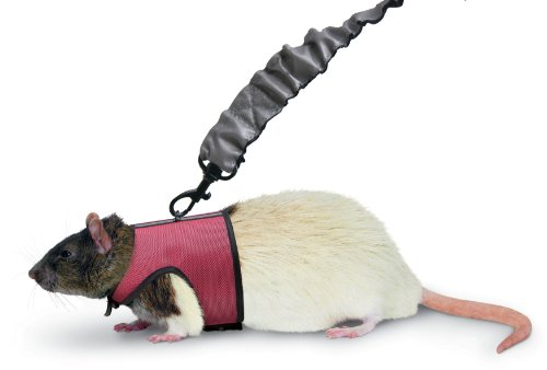 Super Pet Ferret Comfort Harness and Stretchy Small Leash, Colors Vary