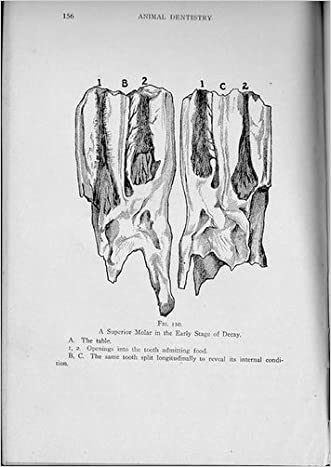 Animal Dentistry and Diseases of the Mouth (Veterinary Surgery, Vol 1) written by Louis Adolph Merillat