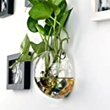 Wall-mounted Half Round Shaped Glass Flower Vase Home Garden Wedding Party Decoration
