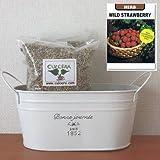 ワイルドストロベリーの栽培セット/標準セット(液体肥料なし)プランターホワイト仕様
