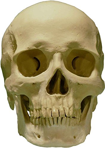 life-size-human-skull-replica-by-nose-desserts