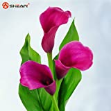 Rare Green Calla Lily Potted Seed Bonsai Balcony Flower 20 Colors Available 100 Particles / Lot