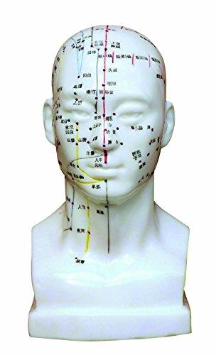 Head Model/Height 8