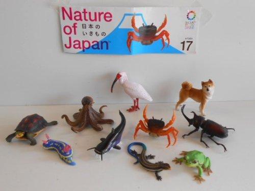 natura-technicolor-giappone-creature-02-tutte-le-10-specie-di-polpo-comune-tutti-e-10-le-specie-1-to