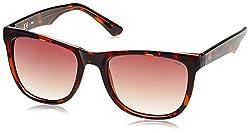 Fila Gradient Wayfarer Men's Sunglasses - (SF903554722SG|54|Brown Gradient)