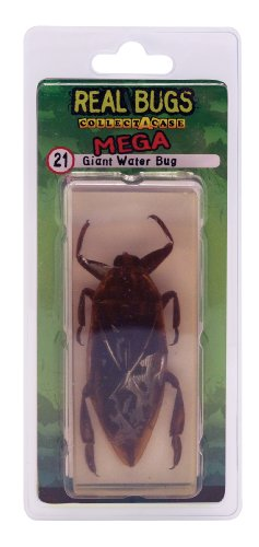 DeAgostini Real Bugs Giant Water Bug - 1