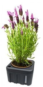 Pflanzen Blumen Wasser Spender , Bewässerung mit 1 Liter Speicher und herausnehmbaren Topf . Wasserspender mit Füllstandanzeige
