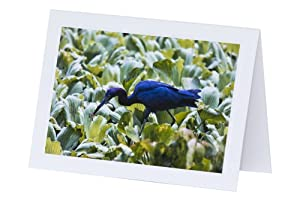 Florida Little Blue Heron with Crawfish 5 x 7 Greeting Cards - Set of 3