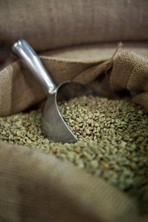 Green Coffee Bean Extract - 90 Veggie Caps - Organic Arabica Green Coffee Antioxidant (Gca), 90 Capsules