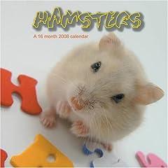 Hamsters 2008 Wall Calendars
