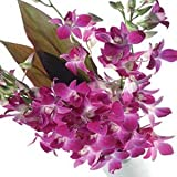 Little India Beautiful Fresh Purple Orchids Flower Gift (Bunch Of 12)