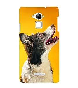 99Sublimation Dog Looking Up 3D Hard Polycarbonate Designer Back Case Cover for Coolpad Note 3