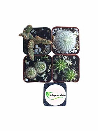 shop-succulents-cactus-succulent-collection-of-4