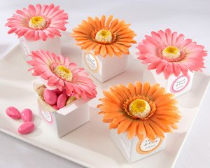 kateaspen Daisy Delight Gerbera Daisy Favor Box, Hot pink